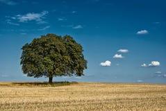 Magischer Baum Stockbild