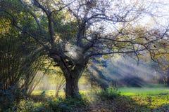 Magischer Baum Stockfotografie