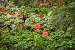 Magischer Blumengarten Stockfotos
