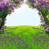 Magischer Frühlingswald Stockfoto