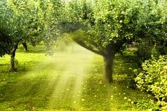 Magischer Garten Stockfoto