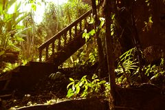 Magischer Garten im Wald Stockfotos