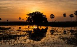 Magischer goldener Sonnenuntergang in den Pantanal-Sumpfgebieten in Paraguay stockfotografie