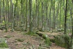 Magischer grüner Wald Lizenzfreie Stockbilder