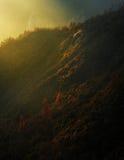 Magischer Mammutbaum-Sonnenuntergang in den hohen Sierra von Kalifornien stockfotos