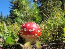 Magischer Pilz lizenzfreie stockfotografie