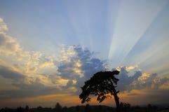 Magischer Sonnenuntergang mit Baum Stockbild