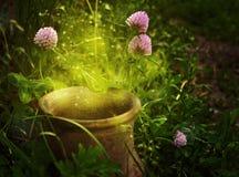 Magischer Topf mit Blumenklee Stockfoto