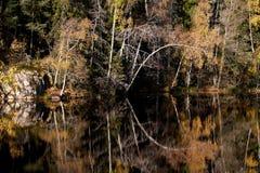 Magischer Wald Lizenzfreie Stockbilder