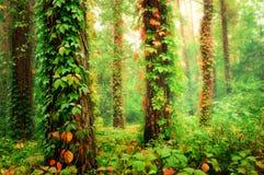 Magischer Wald Lizenzfreie Stockfotos