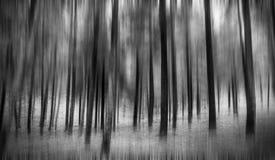 Magischer Wald Stockbilder