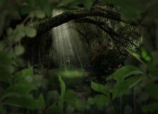 Magischer Wald Stockbild