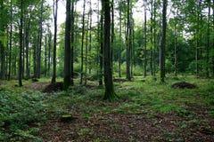 Magischer Wald Lizenzfreies Stockbild