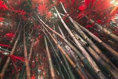 Magischer Wald in Asien Stockfotos