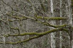 Magischer Wald in der Herbstsaison stockbild