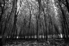 Magischer Wald in der Herbstsaison Stockfoto