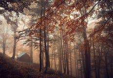 Magischer Wald im Nebel Stockbild