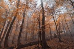 Magischer Wald im Nebel Lizenzfreies Stockfoto