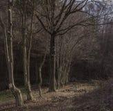 Magischer Wald im späten afrernoon Lizenzfreies Stockbild