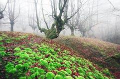 Magischer Wald mit Moos des klaren Grüns Stockfotos