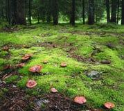 Magischer Wald mit Pilzen auf dem Vordergrund Lizenzfreie Stockfotografie