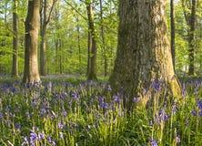 Magischer Wald und wilde Glockenblumeblumen Stockfotografie