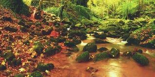 Magischer Waldstromnebenfluß im Herbst mit Steinmoosfarnen und gefallenen Blättern stockfotografie