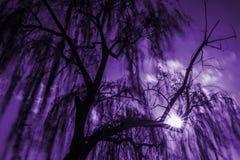 Magischer Weidenbaum stockfotografie