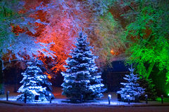 Magischer Weihnachtsbaum Lizenzfreies Stockbild