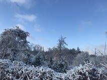 Magischer Winter in ZP stockfotografie