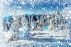Magischer Winterschnee bedeckte Baum, Hintergrund mit irgendeinem weichem Hoch Stockfotografie