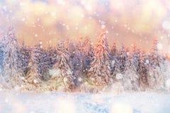 Magischer Winterschnee bedeckte Baum, Hintergrund mit irgendeinem weichem Hoch Stockfotos