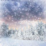 Magischer Winterschnee bedeckte Baum, Hintergrund mit irgendeinem weichem Hoch Stockbild