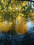 Magisches Blau im Herbst Stockfotos