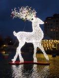 Magisches Rotwild Weihnachtslicht stockfotografie