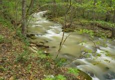 Magisches Virew am Brüllen des Laufnebenflusses und des Waldes stockbilder