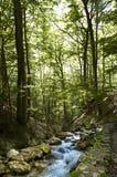 Magisk avslappnande skog Arkivbilder