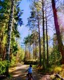 Magisk Bikeride skog royaltyfri foto