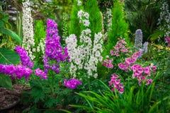 Magisk blom- trädgård Arkivbilder
