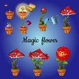 Magisk blomma för odlingetapp Arkivfoton