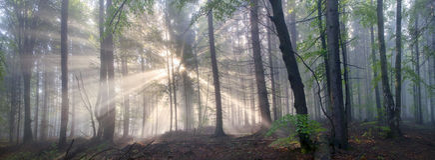 Magisk Carpathian skog på gryning royaltyfri bild
