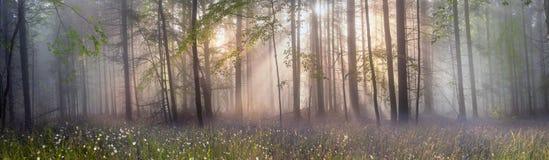 Magisk Carpathian skog på gryning Royaltyfri Fotografi