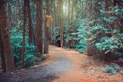 Magisk drömlik skogbakgrund Royaltyfria Bilder