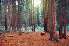 Magisk drömlik skogbakgrund Royaltyfri Foto