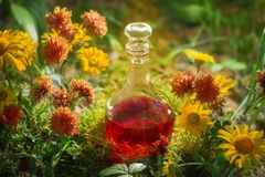 Magisk dryck i flaska i skog royaltyfria foton