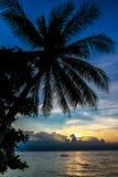 Magisk färgrik solnedgång med palmträdkonturn Royaltyfri Foto