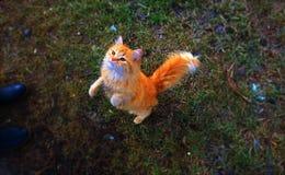 Magisk färgrik värld med en magisk katt royaltyfri foto