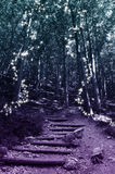 Magisk felik skog Fotografering för Bildbyråer