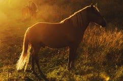 Magisk häst Arkivfoton