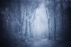 Magisk julskog med dimma royaltyfri fotografi